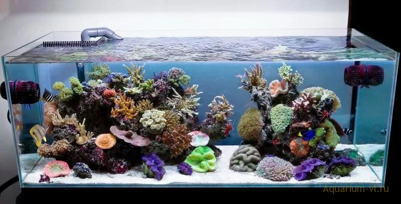 Соотношение поверхности и объёма аквариума