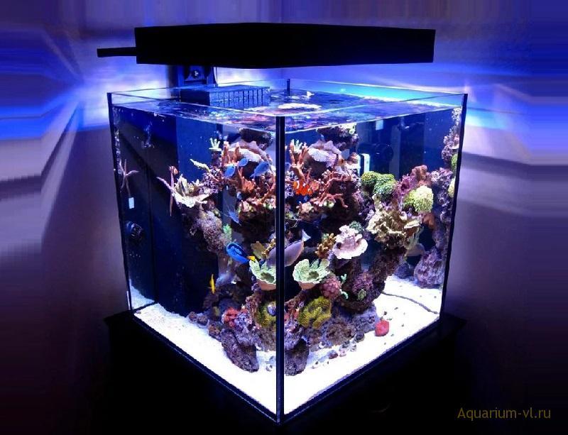 Морской нано-аквариум