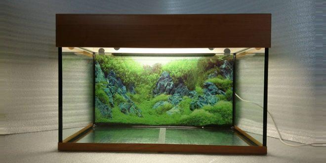 Аквариум 105 литров: размеры