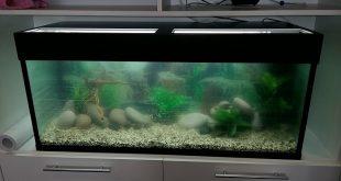 Подмена воды в домашнем аквариуме