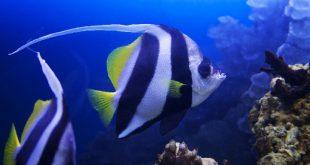 Виды морских аквариумных рыбок
