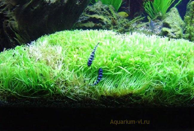 Содержание аквариумных растения