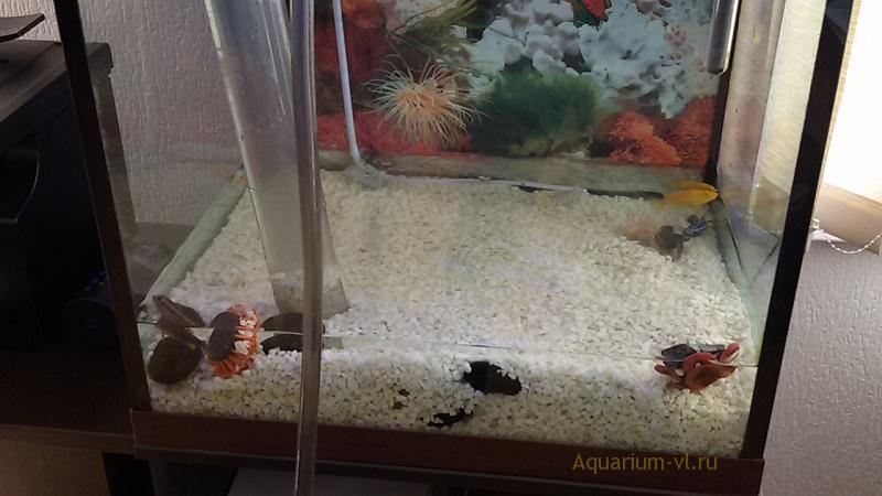 Полная смена воды в аквариуме