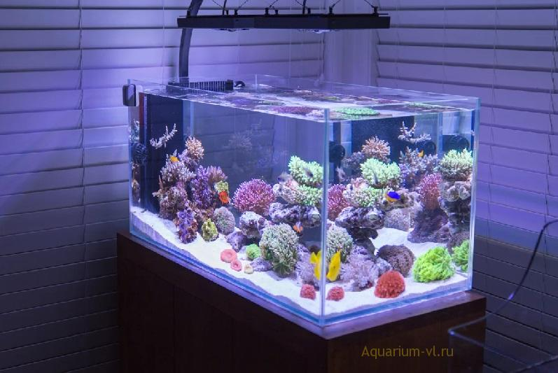 Форма для морского аквариума