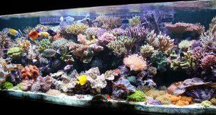 История морской аквариумистики XIX века