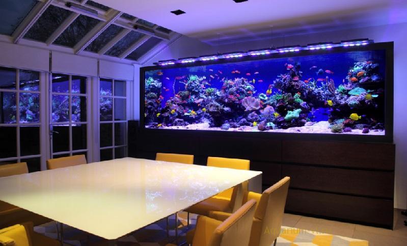 Выбор морского аквариума