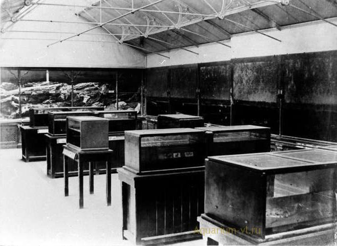 Первые аквариумы начало 19 века