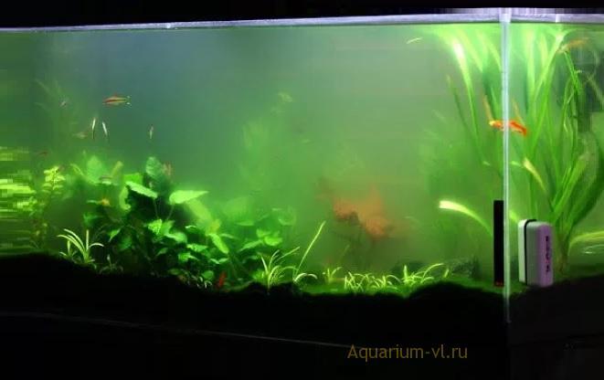 Показатели качества воды в аквариуме