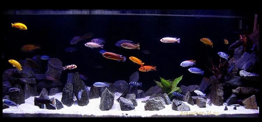 Температура аквариумной воды