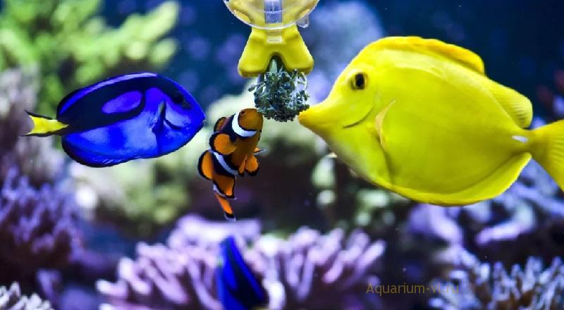 Кормление морских рыбок в аквариуме