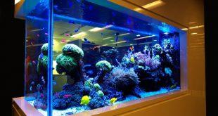 Что нужно знать при выборе морских рыбок