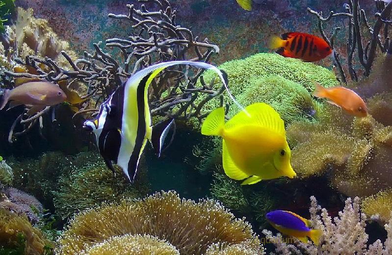 Параметры воды и транспортировка морских рыбок