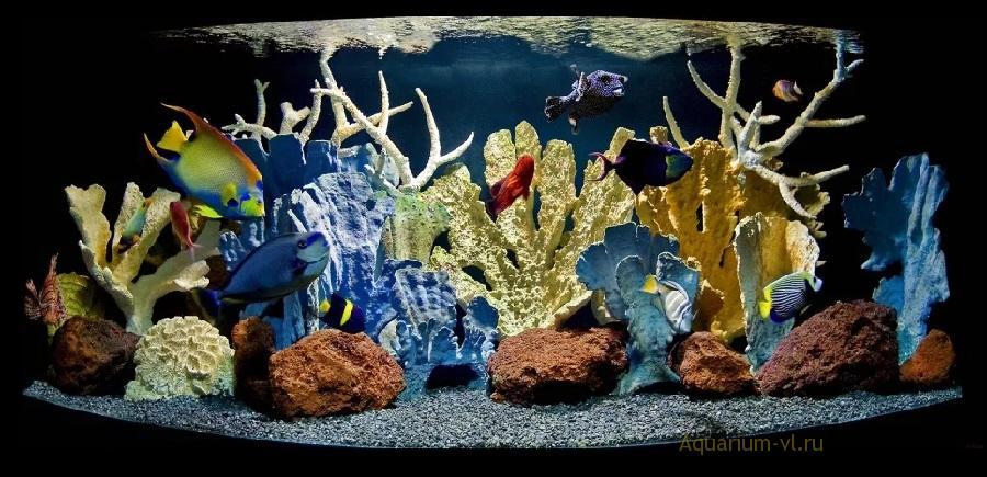 Размер и поведение морских рыбок
