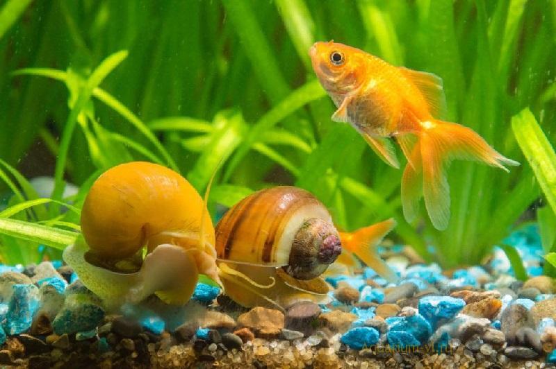 Как жёсткость действует на рыб