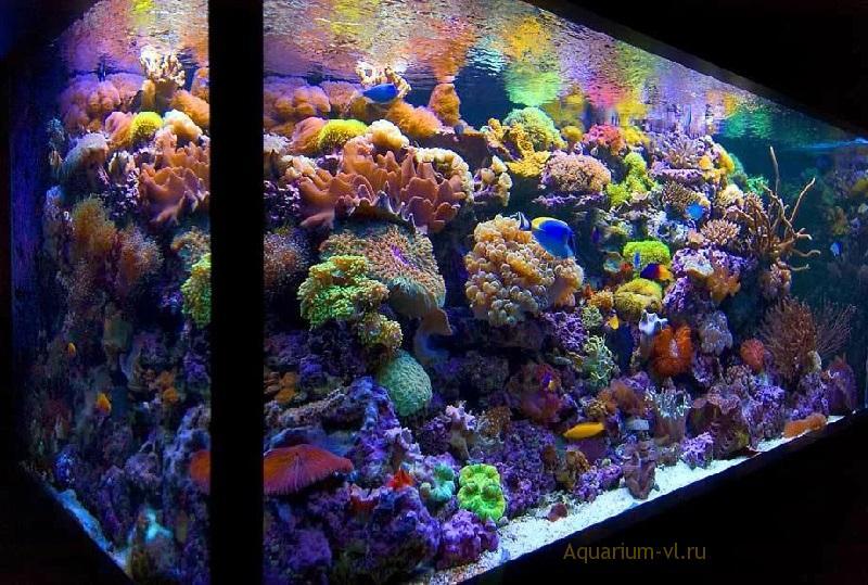 Смены воды в морском аквариуме