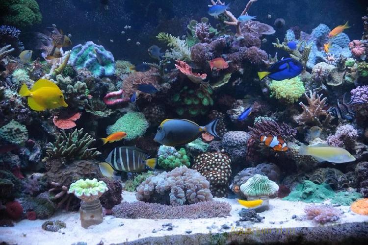 Три способа смены воды в аквариуме