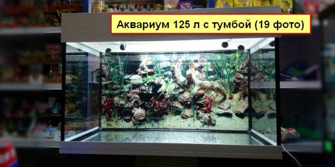 Аквариум 125 литров (19 фото) с тумбой: размеры