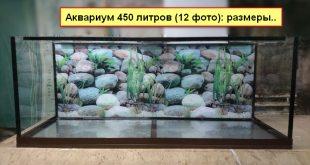 На фото аквариум 450 литров