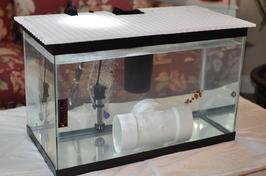 Карантин аквариумных рыбок