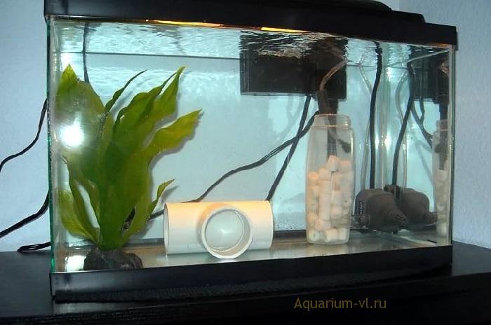 Карантин рыбок после покупки