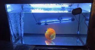 Карантинирование новых рыб