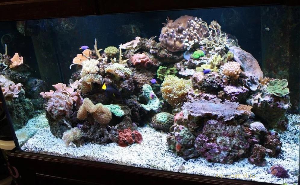 домашний морской аквариум