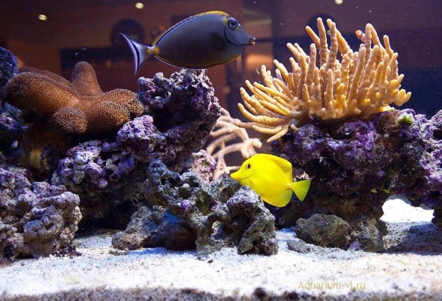 Морской рифовый аквариум