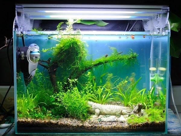 Купить креветок для аквариума