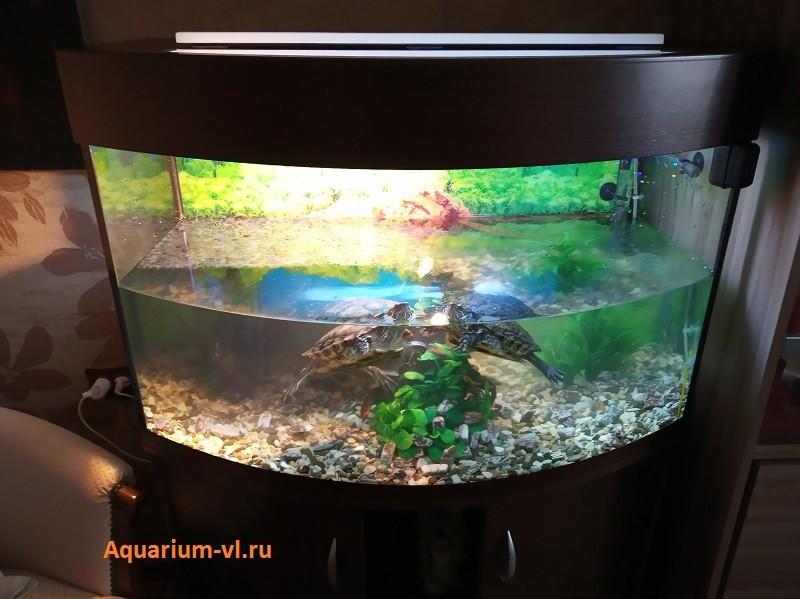 террариум для красноухой черепахи недорого