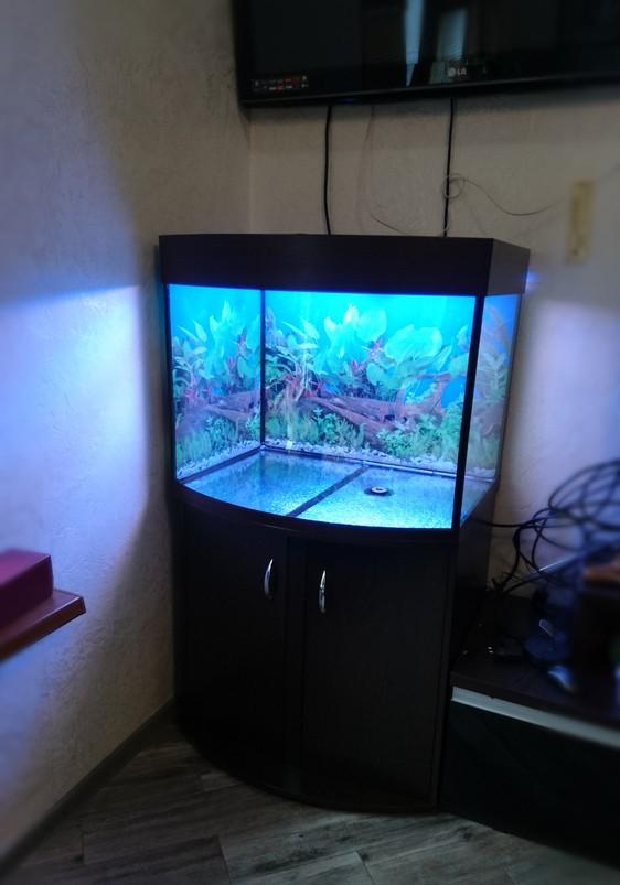 панорамный аквариум фото