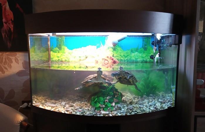 террариум для красноухих черепах