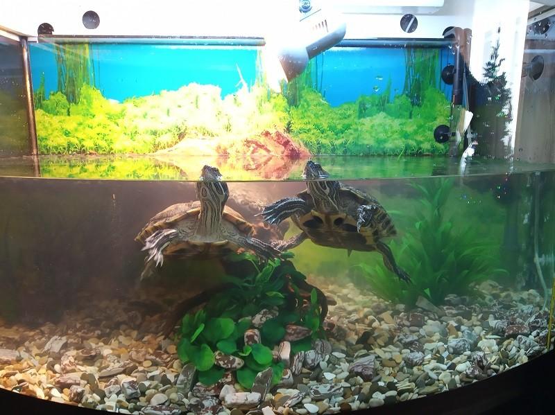 террариум с тумбой для красноухих черепах